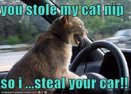 Image - I'm serious, my cat stole my car. Look.  - Post 594