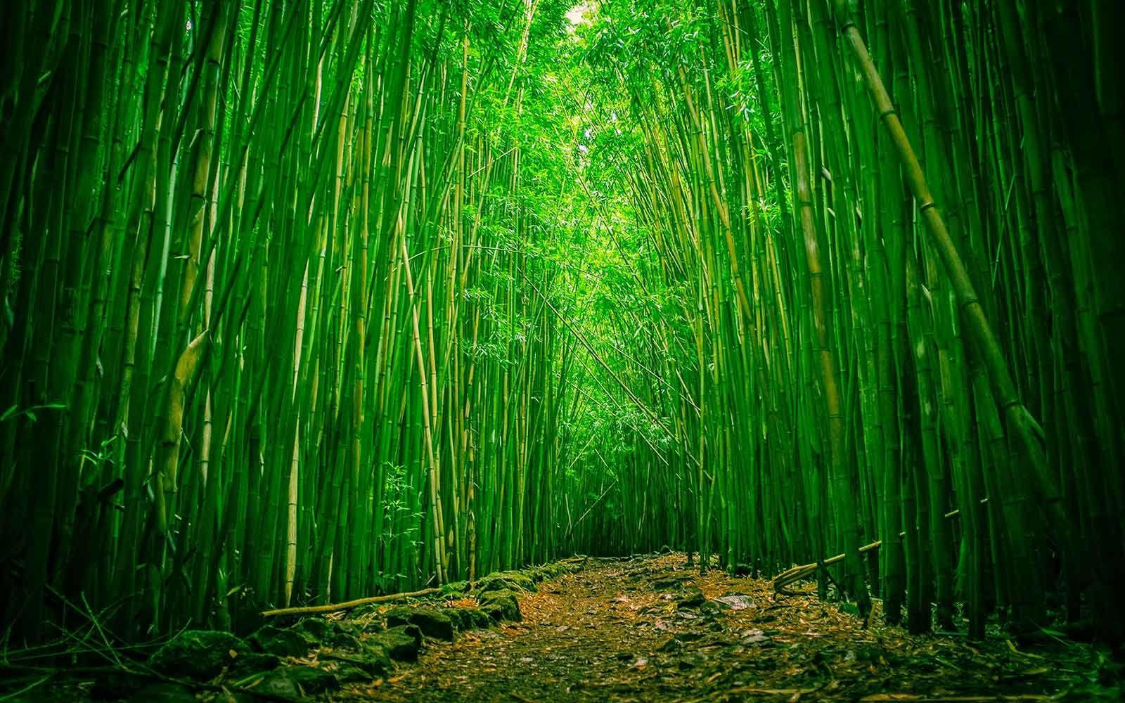 Image - This is the exact same thing I'm growing in my bedroom, look at this lovely bamboo. #pandas - Post 974